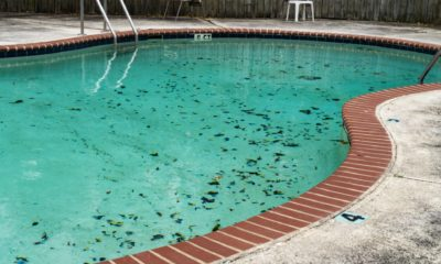 how-to-rid-your-pool-of-algae?